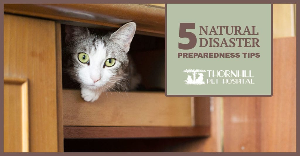 Pet Tips for Natural Disasters in Oakland, CA