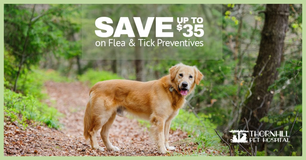 Flea & Tick Pet Prevention in Oakland, CA